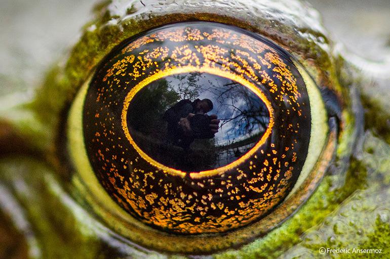 Photographer Nature Portrait Wildlife Frederic Ansermoz